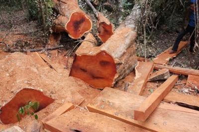 Đề nghị xử lý nghiêm các vụ phá rừng