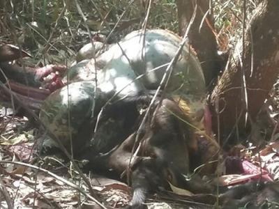 Đồng Nai: Xử lý cán bộ kiểm lâm bỏ trực trong vụ bò tót bị bắn