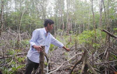 Tái diễn nạn chặt phá rừng Cà Mau