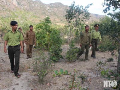 Thực hiện quyết liệt các giải pháp phòng, chống cháy rừng trong mùa khô